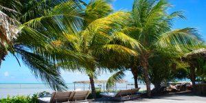 Um paraíso em Alagoas