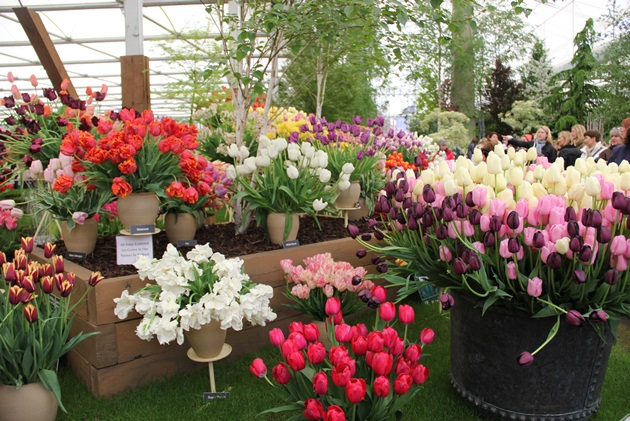 Chelsea-Flower-Show-Lari-Duarte-site-blog-100-years-how-to-go-about-