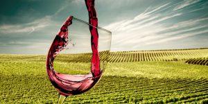 Guia de viagem: quais vinícolas visitar no Vale dos Vinhedos?